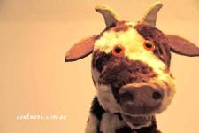 Mr Bull - funstuff